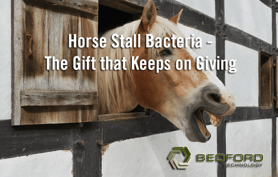 Horse Stall Bacteria – The Gift that Keeps on Giving